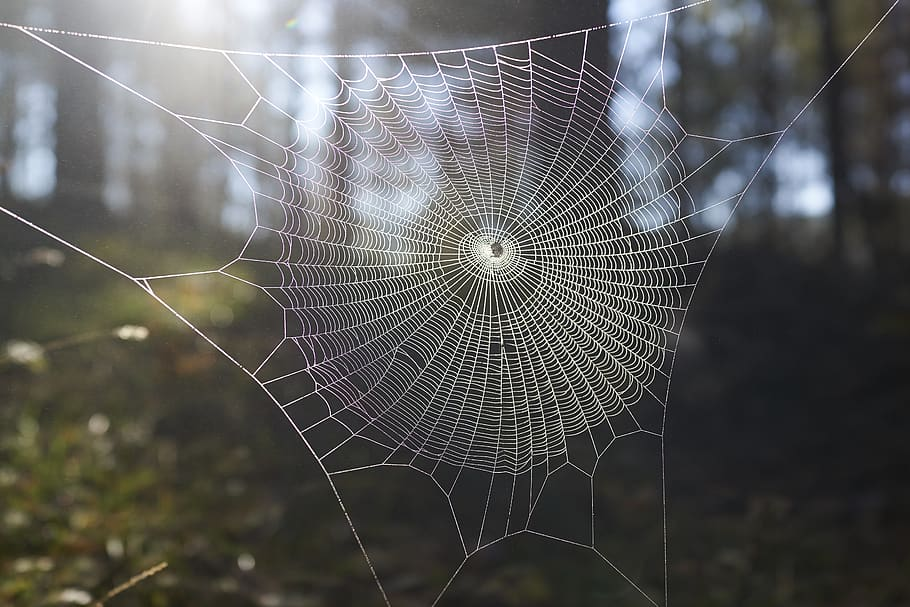 A web of complexity
